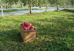 果樹園のような経営を