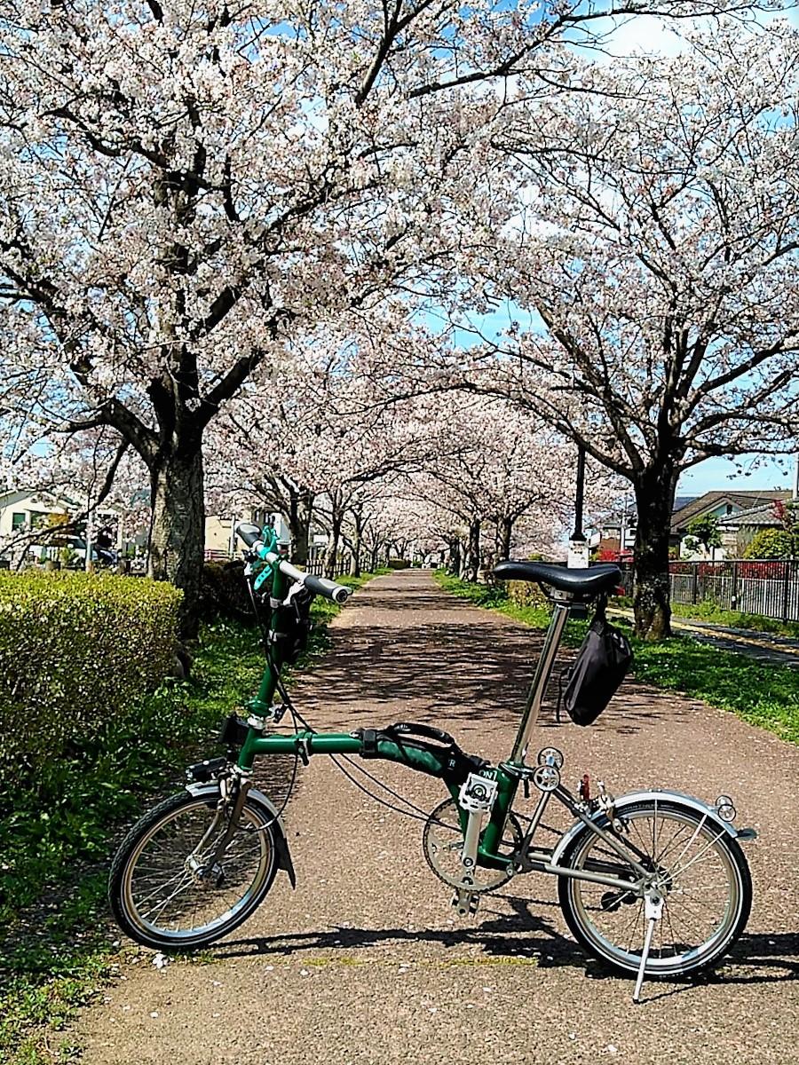 桜のトンネルのような「回廊線」